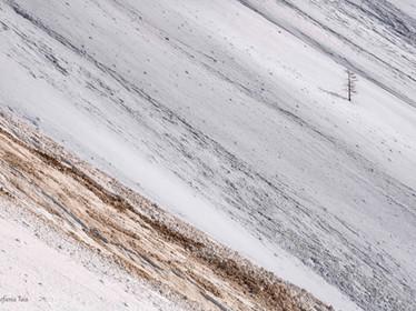 Neve speziata