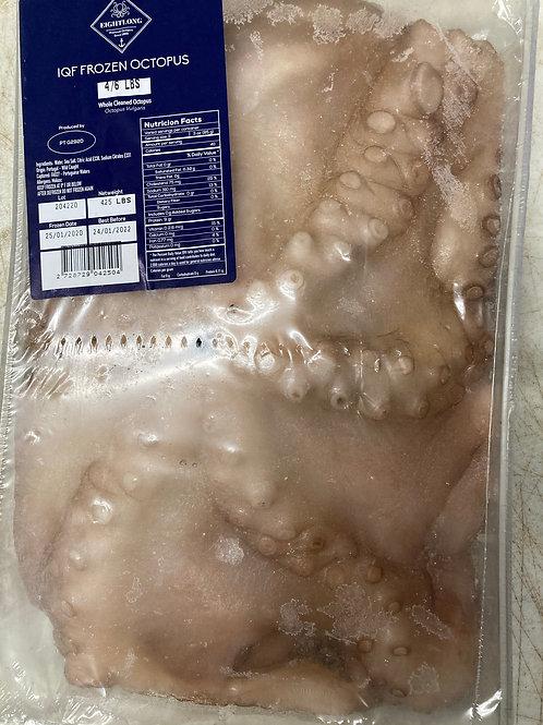 Wild Octopus Spain