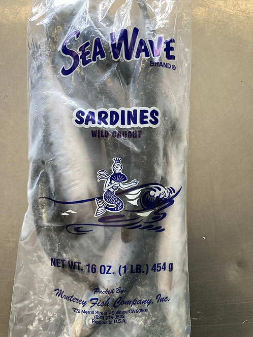 Wild Sardine