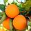 Thumbnail: Sweet Orange and Ginger