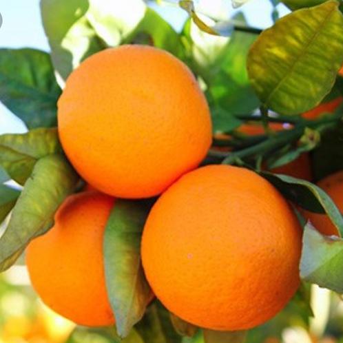 Sweet Orange and Ginger