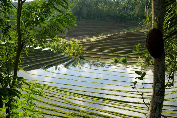 Rice terraces in the area of the rice basin in Bali, Indonesia