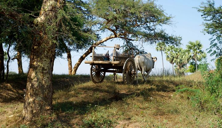 A farmer in Old Bagan, Bagan Region, Myanmar