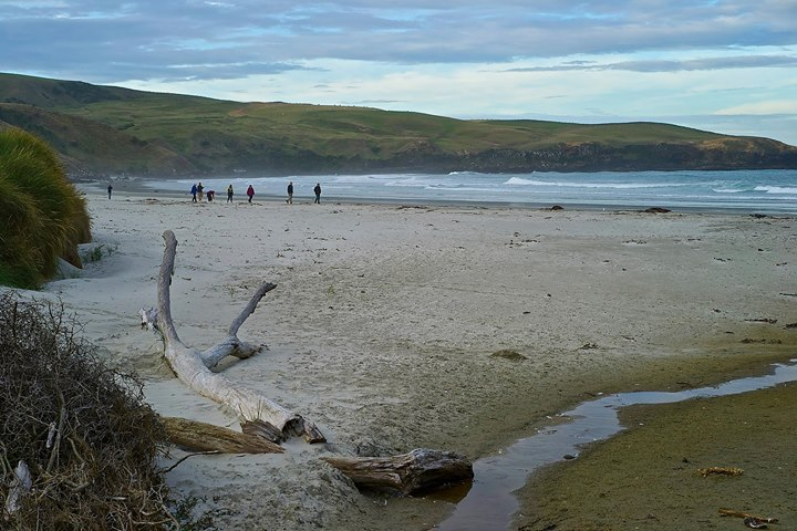 Papanui Beach, Otago Peninsula, Dunedin, South Island