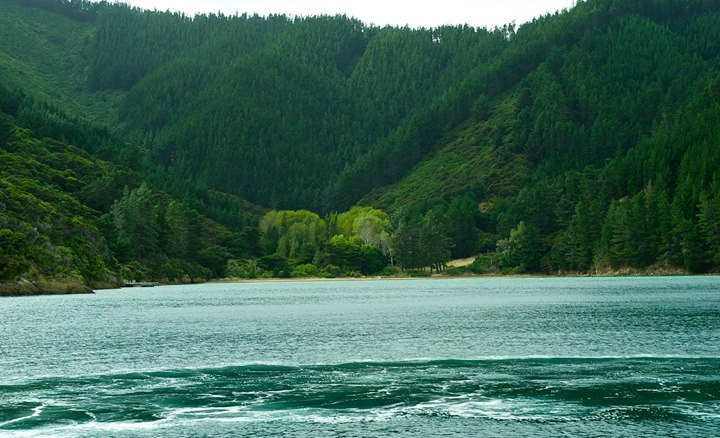 Totaranui, Picton, South Island