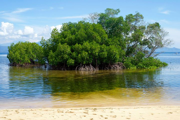 Part of the mangrove forest near Paradise Beach, Nusa Lembongan, Indonesia