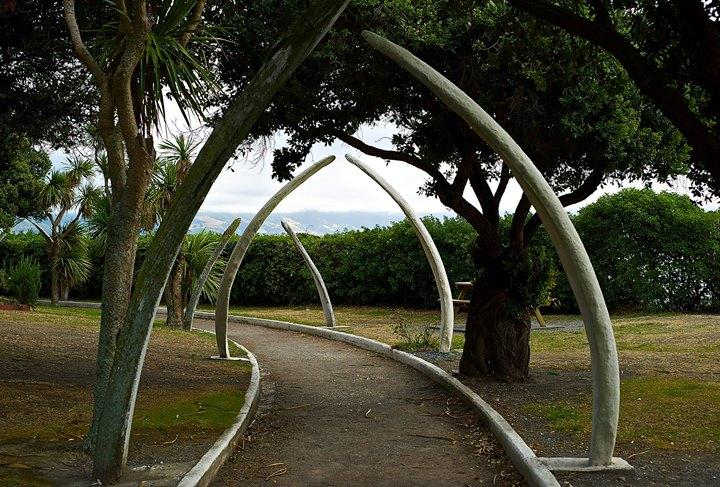Whale bones in Kaikoura's Garden