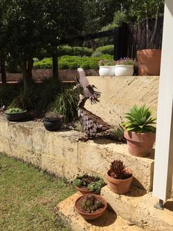 outdoor pelican