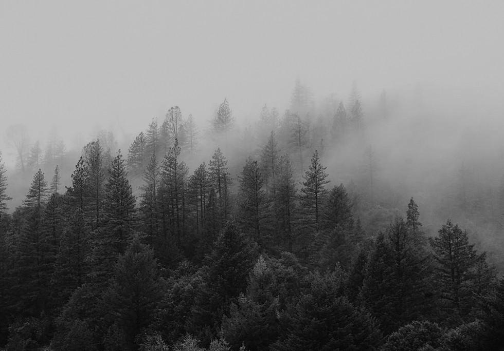 Kaiasul Wood 02.jpg