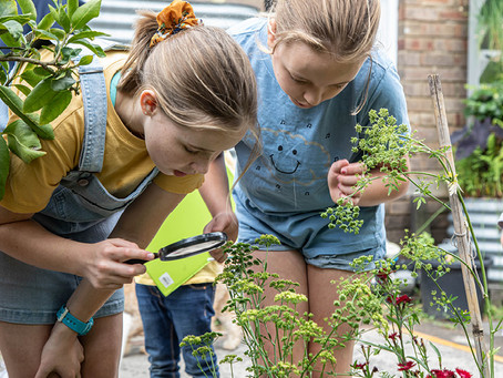 Focus on Free: Junior Landcare Learning