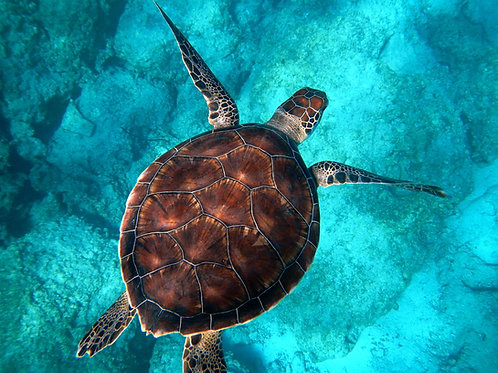 9-Day Galapagos Adventure - Integrity - Trip Deposit
