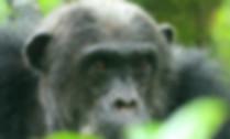 African Wildlife Safari Adventure Trips   Walking Connection