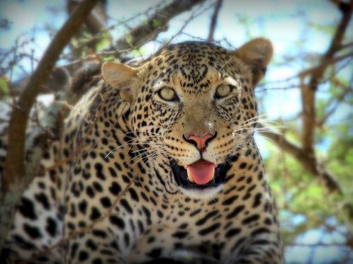 Tanzania Safari Adventure 2019, Trip Deposit