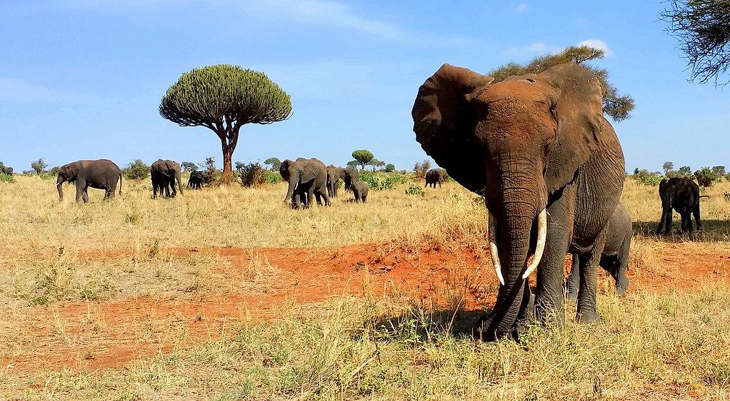 elephants-by-ja-02.jpg