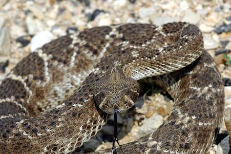Snake Bite Myths & Misconceptions