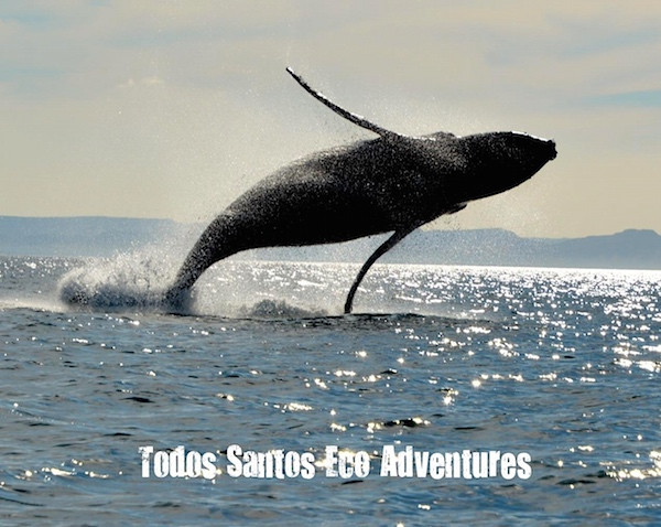 Todos Santo Eco Adventures