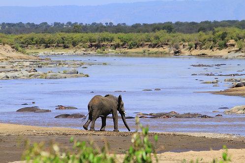 Combination Pre, Main Event, 3-Night Safari Trip Deposit