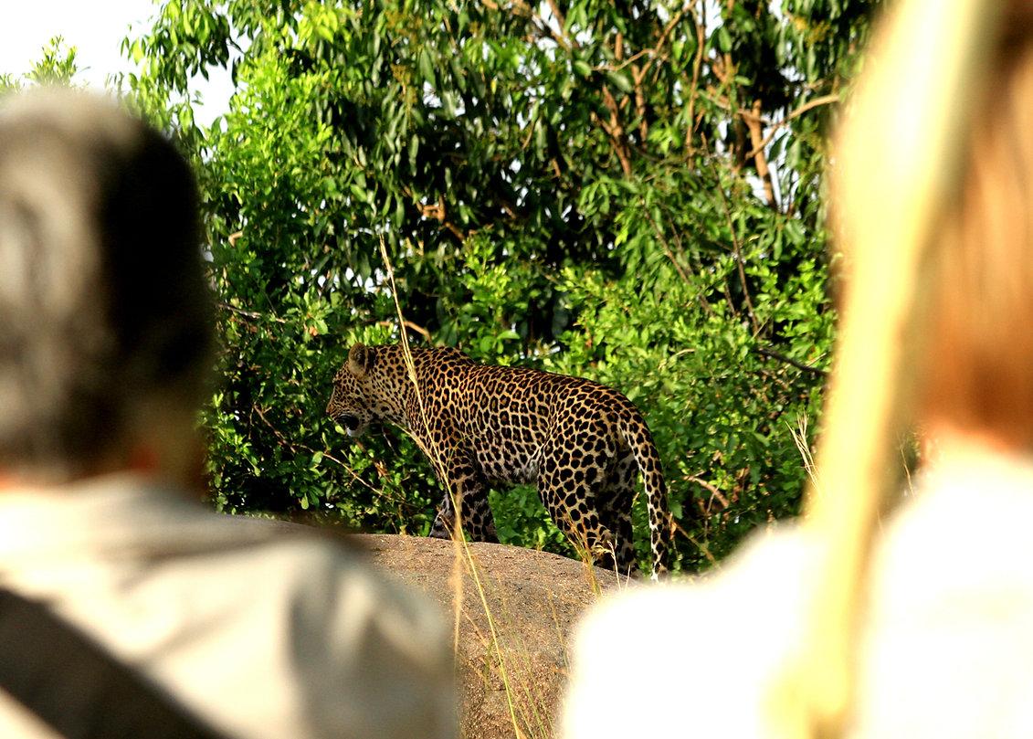 GenesJourney-Leopard-Rock-Safari-01.jpg