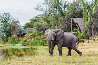 Btswanaelephant.jpg