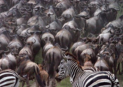 Tanzania Safari – Where Less Is More