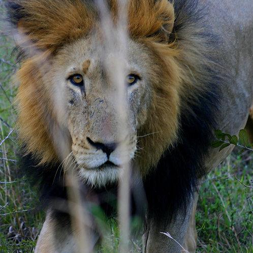 3x South African Wildlife Safari Trip Deposit
