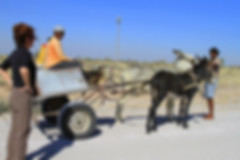 donkey cart, namibia, people sharing