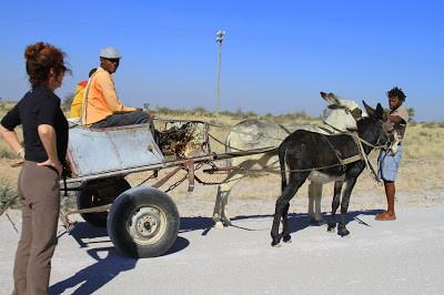 donkey cart, namibia, people sharing