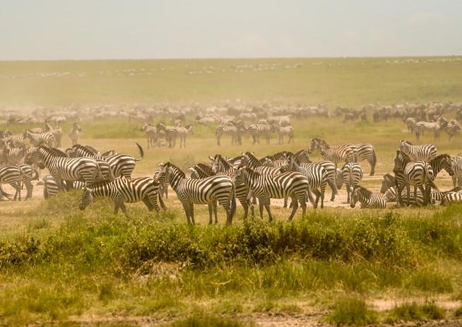 Zebra Herd @Hidden Valley