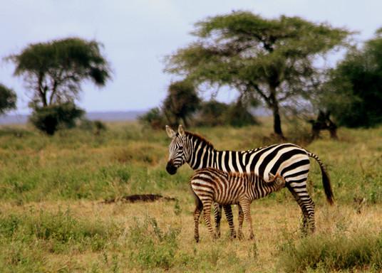 Safari On!