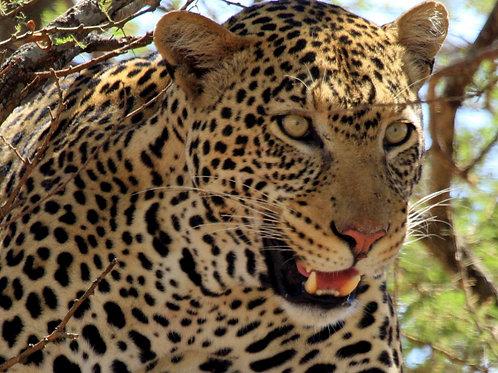 6x South African Wildlife Safari Trip Deposit