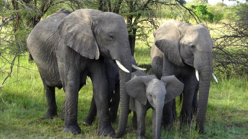 Elephants invade our camp!