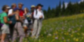 hikers, wildflowers, meadow