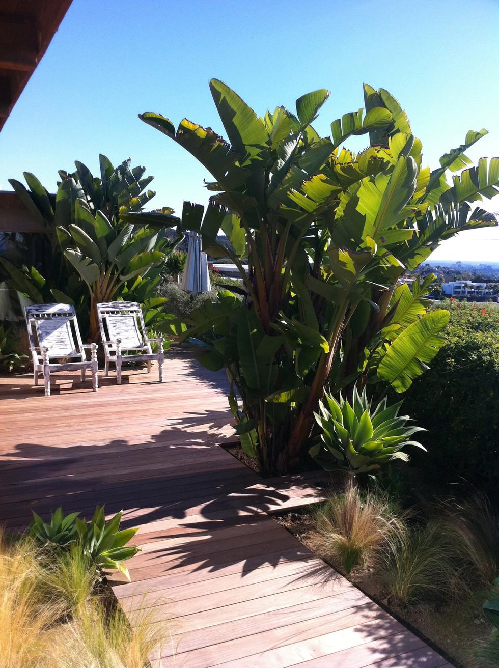 Tellum Dr. Landscape -- Pacific Palisades, CA