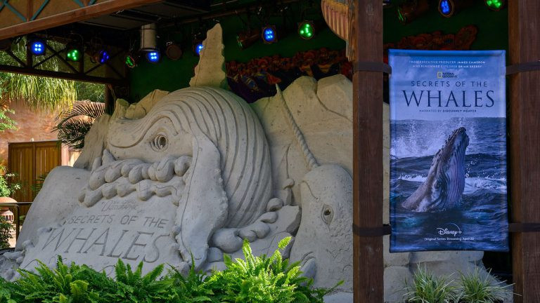 New Sand Sculpture at Animal Kingdom Features Whales Inspired by New Disney+ Original Series!