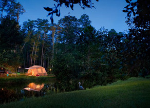 Special Offer for Disney's Fort Wilderness Resort & Campground Campsites