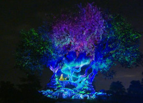 Watch the Tree of Life 'Awaken' For the Holidays at Disney's Animal Kingdom!
