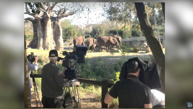 Disney's Animal Kingdom Helps Inspire 'The Lion King' Film