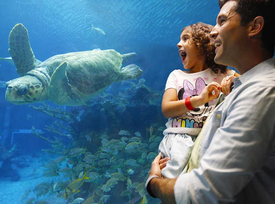 A New Scavenger Hunt is Now Available at The Seas with Nemo & Friends at EPCOT