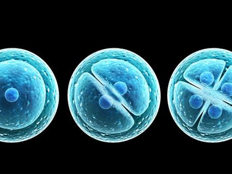 ¿Cuál es la diferencia entre cigoto, embrión, feto y bebé?