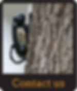 Tree with phone