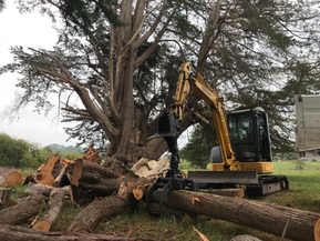 Removing large trees