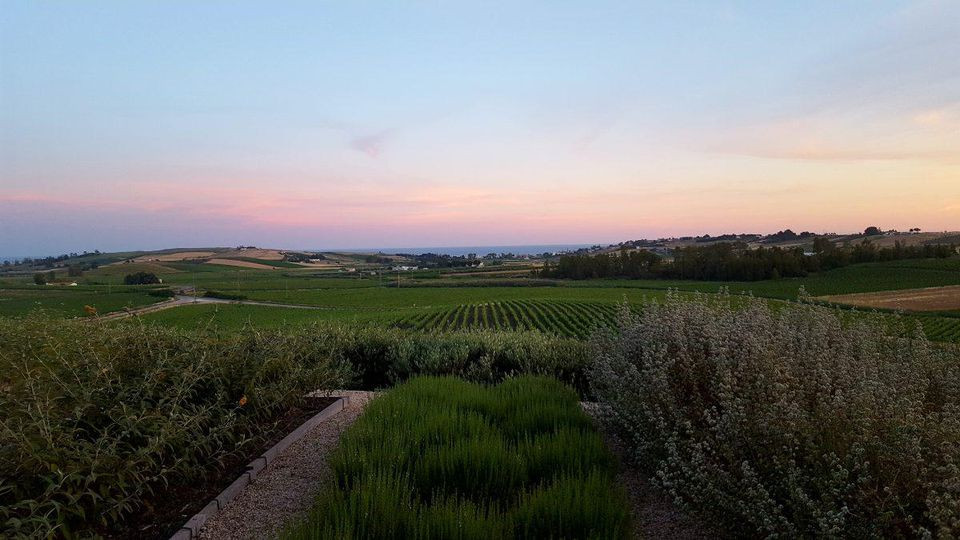 The view from La Foresteria, the luxury resort of the Planeta wine estate, in Menfi. ALEXANDRA KIRKMAN