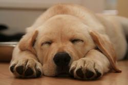 puppy-1371458