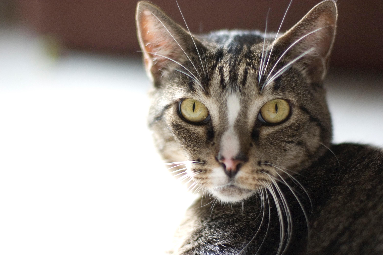 Katze Kleintierpraxis Biesenthal