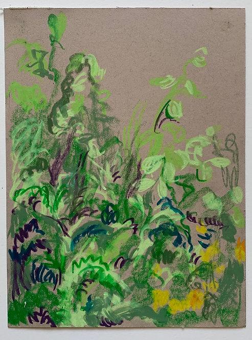 Plants/overgrowth study 1, crayon on card