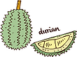 Durian cartoon icon_opt.png