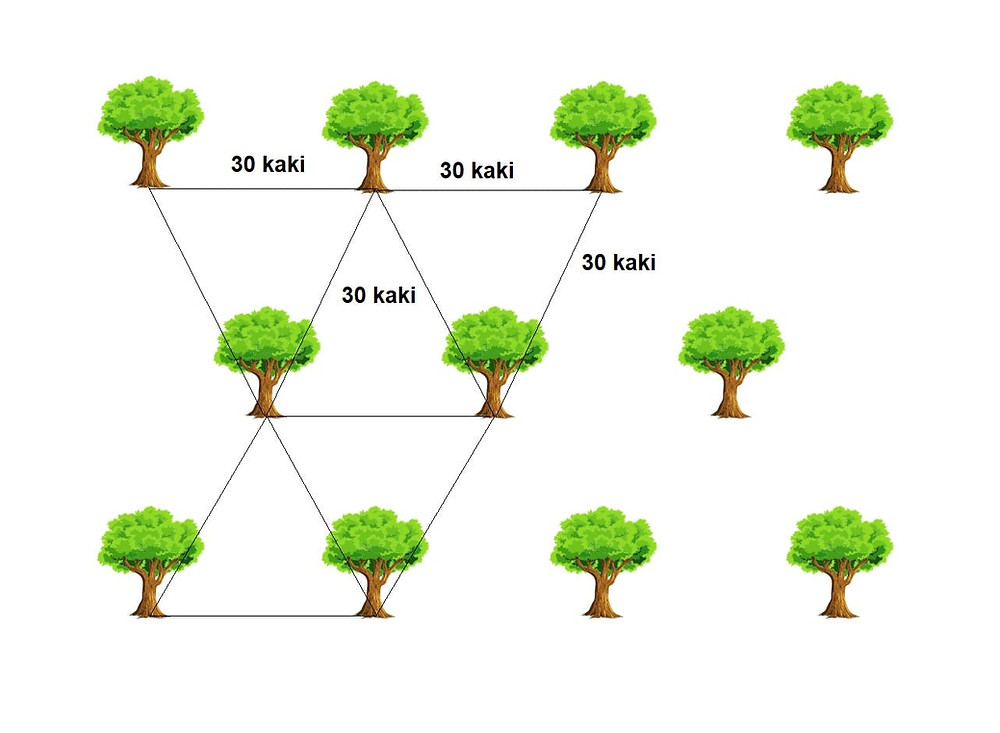 durian planting distance