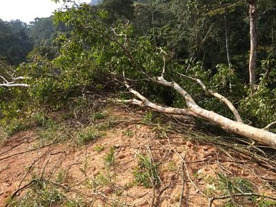 tree cutting, rubber tree, land clearing, durian D200 farm
