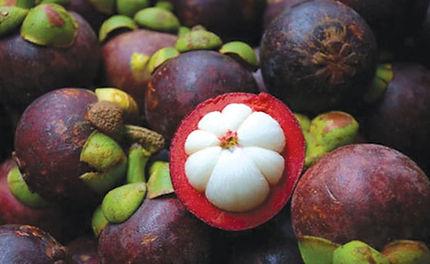 buah mesta, manggis, mangosteen, tropical fruit