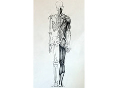Medical Anatomy Illustration